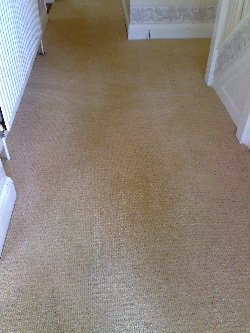 Carpet cleaned and ink stains removed at a property in East Bergholt