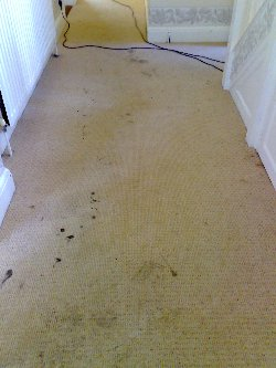 Ink Stains at a property in East Bergholt